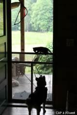 Shadow au dessus de la porte